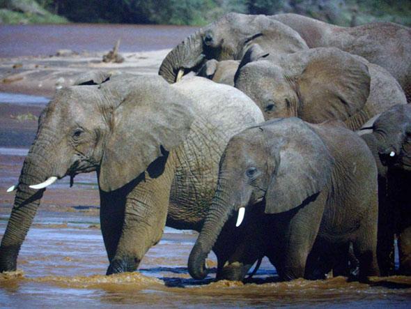 KZN Wildlife