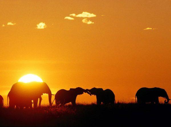 San Safaris